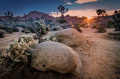 Photograph - Joshua Tree Sunrise by Ralph Vazquez