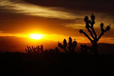 Photograph - Joshua Tree Sunset In Nevada by Tranquil Light Photography