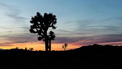 Photograph - Joshua Tree Sunset by Loree Johnson