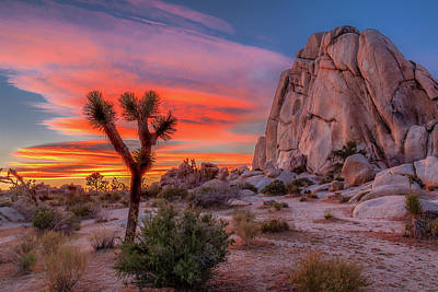 Hdr Landscape Photograph - Joshua Tree Sunset by Peter Tellone