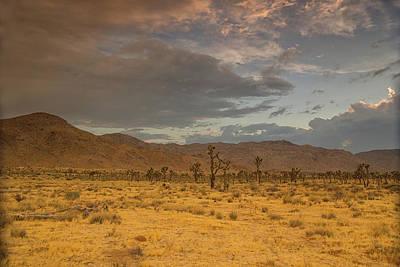 Photograph - Joshua Tree Thunderstorm by Kunal Mehra