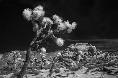 Photograph - Joshua Trees And Boulders In Infrared Black And White by Randall Nyhof