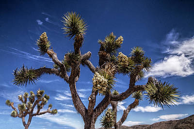 Photograph - Joshua Trees And Clouds In Joshua Tree National Park by Randall Nyhof
