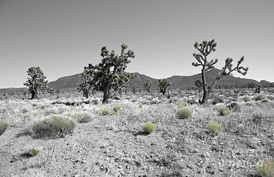 Photograph - Joshua Trees by Blake Yeager