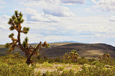Photograph - Joshua Trees In Arizona by Tatiana Travelways