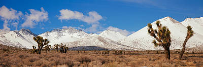 Snow-covered Landscape Photograph - Joshua Trees In The Sierra Nevada by Panoramic Images