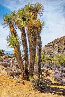 Photograph - Joshua Trees Series No.1_9150214 by Sandra Selle Rodriguez