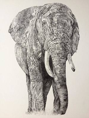 Elephant Pencil Drawing Drawing - Journey by Jordan Price