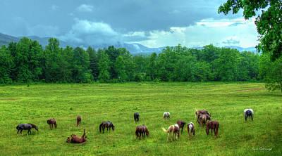 Photograph - Joy After A Rain 2 Cades Cove Horses Great Smoky Mountain Art by Reid Callaway
