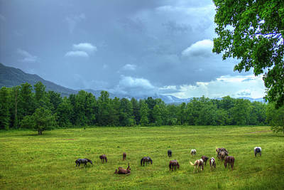 Photograph - Joy After A Rain Cades Cove Horses by Reid Callaway
