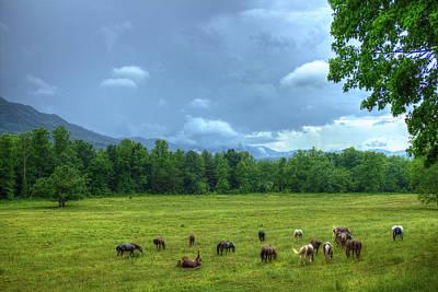 Photograph - Joy After A Rain Cades Cove Horses Art by Reid Callaway
