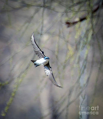 Photograph - Joy In Flight by Kerri Farley