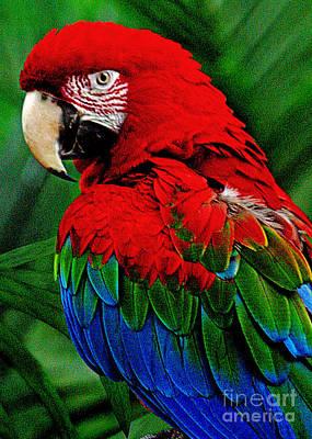 Macaw Digital Art - Joy by Mark Kryzaniak