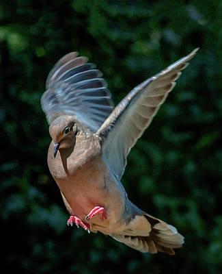 Photograph - Joy Of Flight by Jim Moore