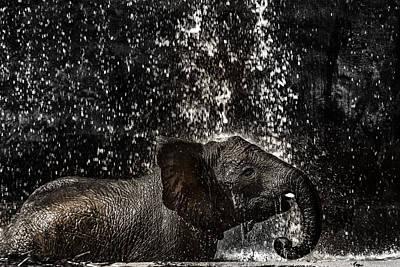 Photograph - Joy Of Life by Edgar Laureano