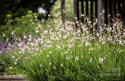 Photograph - Joy Of Spring by Iris Greenwell