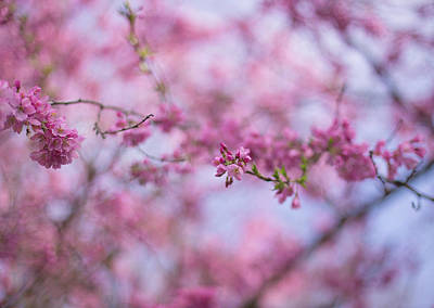 Photograph - Joy Of Spring by Kunal Mehra
