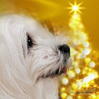 Maltese Dog Christmas Cards Wall Art - Mixed Media - Joy To The World by Morag Bates
