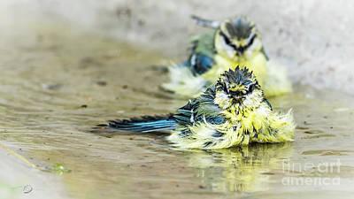 Blue Tit Photograph - Joy by Torbjorn Swenelius