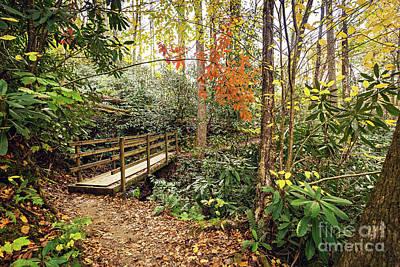 Photograph - Joyce Kilmer Memorial Forest by Joan McCool