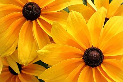 Photograph - Joyful Bright Yellow Flowers  by Pierre Leclerc Photography