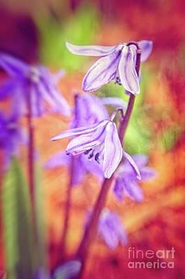 Photograph - Joyful Spring by Mary Machare