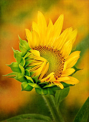 Photograph - Joyful Sunflower by Carolyn Derstine