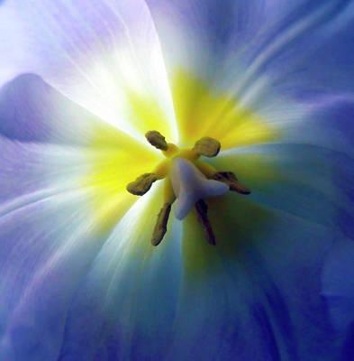 Photograph - Joyful Tulip Macro by Johanna Hurmerinta