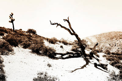 Photograph - Jtnp Scene 3 by Newman Artography