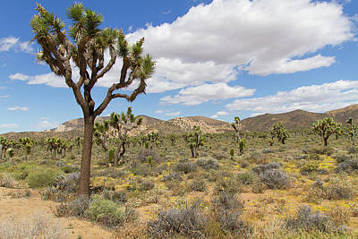 Photograph - Jtnp Scene 5 by Newman Artography