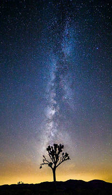 Astro Photograph - Jtree by Cole Pattschull