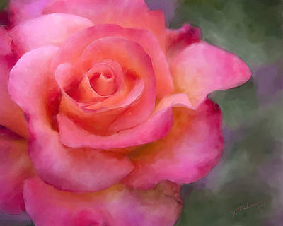 Photograph - Judys Rose by Jeanette Mahoney