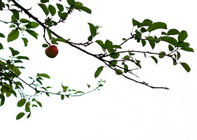 Moody Trees - Juicy   A Tempting Photograph of a Tasty Ripe Red Apple On A Tree  by Angela Rath