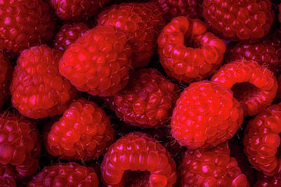 Raspberry Wall Art - Photograph - Juicy Red Raspberries by Garry Gay