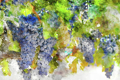 Photograph - Juicy Red Wine Grapes On The Vine by Brandon Bourdages