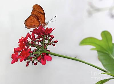 Photograph - Julia Butterfly Elegance by Karen Adams