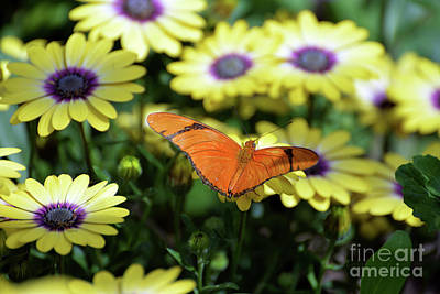 Photograph - Julia Butterfly I by Denise Bruchman