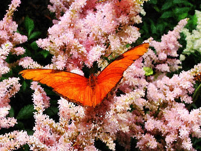 Butterfly Photograph - Julia Butterfly On Pink Flowers by Susan Savad
