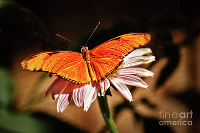 Photograph - Julia Butterfly by Robert Bales