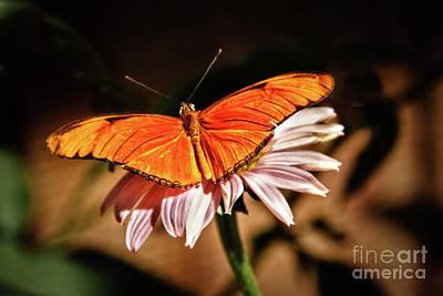 Julia Butterfly Art Print by Robert Bales
