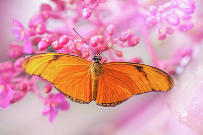 Photograph - Julia Heliconian On Pink Flowers. Tropical Butterflies by Jenny Rainbow