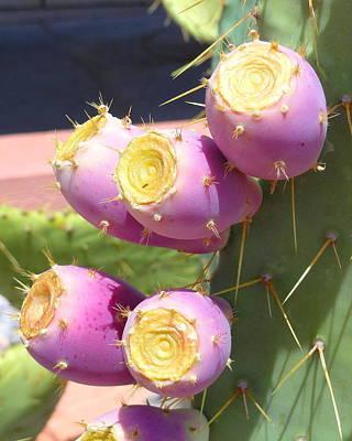 Priska Wettstein Pink Hues - Julie Dobson Miner Purple Cactus Flowers by Julie Dobson Miner