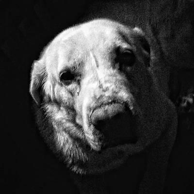 Head Photograph - Julio #dog #pet #animal #instadog by Rafa Rivas