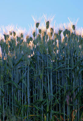 Photograph - July Crops II by Doug Davidson