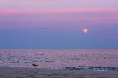Photograph - July Full Moon 2016 Lavallette Nj by Terry DeLuco