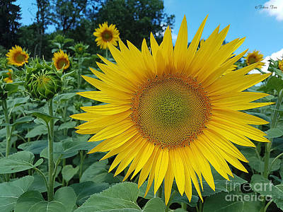 Photograph - July Sunshine by Felicia Tica