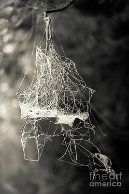 Photograph - Jumbled Spider Web by Edward Fielding