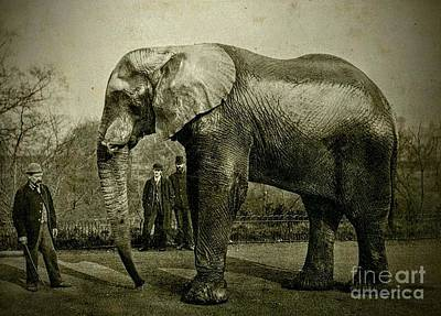 Jumbo The Elepant Circa 1890 Art Print by Peter Gumaer Ogden