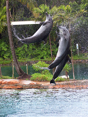 Photograph - Jump And Twist Dolphin Show by Miroslava Jurcik