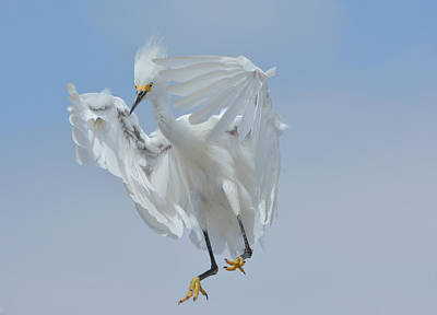 Photograph - Jump by Fraida Gutovich